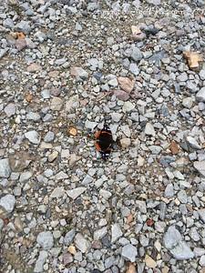 20150517-Butterfly-02