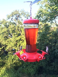 20150812-HummingBirds-10