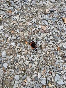 20150517-Butterfly-01