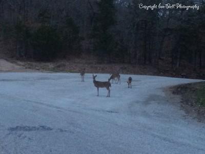 20150321-Deer-01