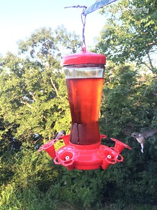 20150812-HummingBirds-07