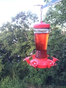 20150812-HummingBirds-05