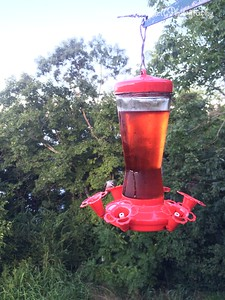 20150812-HummingBirds-06