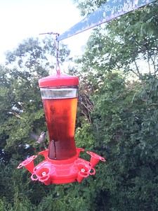 20150812-HummingBirds-03