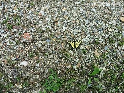 20150510-Butterfly-01