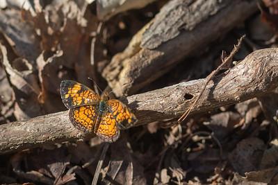 20190831-HobbsStatePark-VanWinkleTrail-Butterflies-1