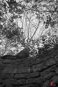 20170401-EurekaSpringsArkansas-Tree-1w