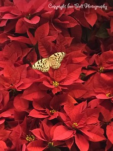 20141226-ButterflyPalace-BransonMO-NickSarahAnnaliseDracoHeather-20