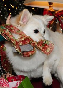 2013 Christmas - Englishes (20)