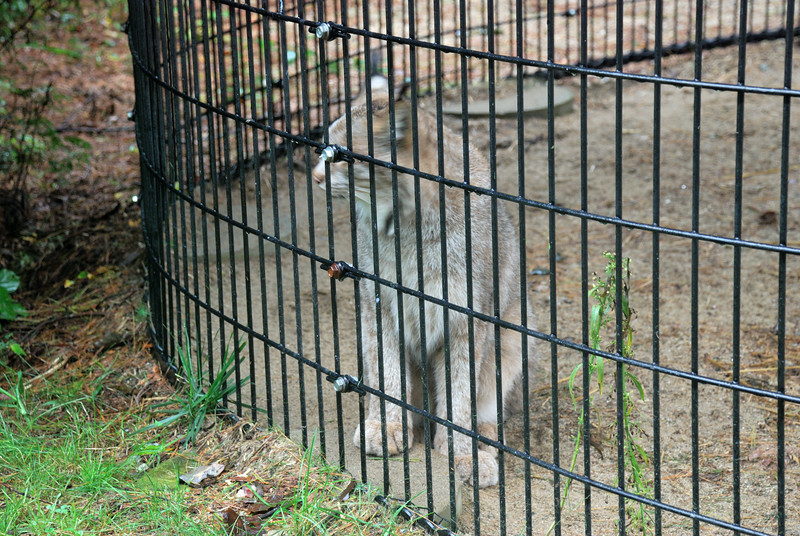 Family visit to the Maine Wildlife Park