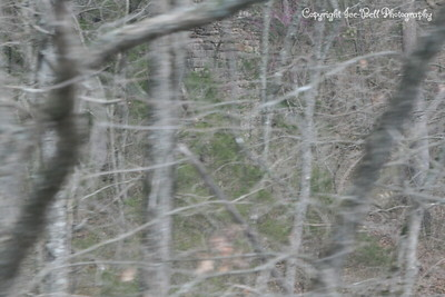 20120315-YHighwayCircleOfFriend-BransonExcursionTrain-72