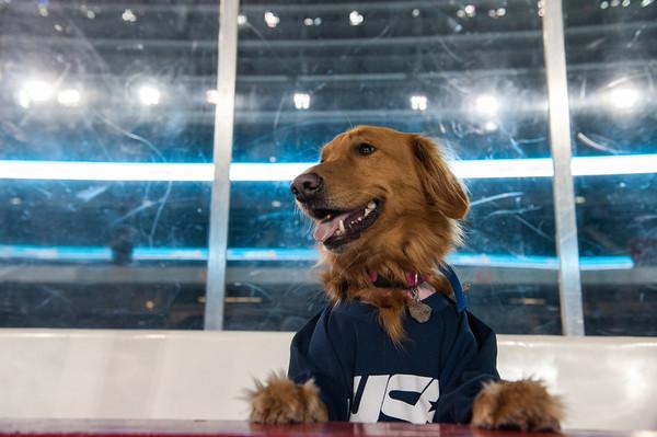 MeganBearder_USAWARRIOR_hockey_04