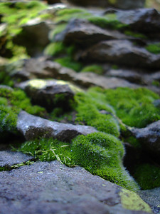 Rock and moss (Grand Mesa, CO)