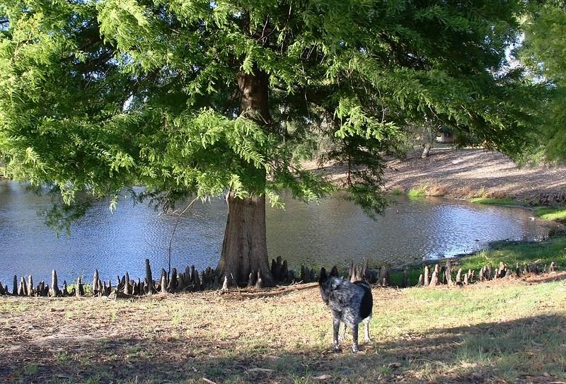 Cinders at Sheldrake Park 'Duck Pond'