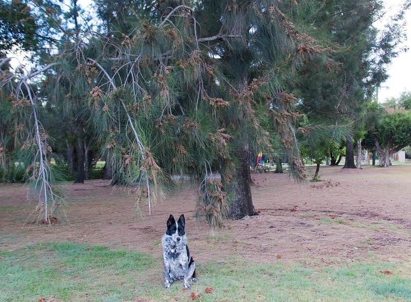 Cinders at Sheldrake Park Sheoaks
