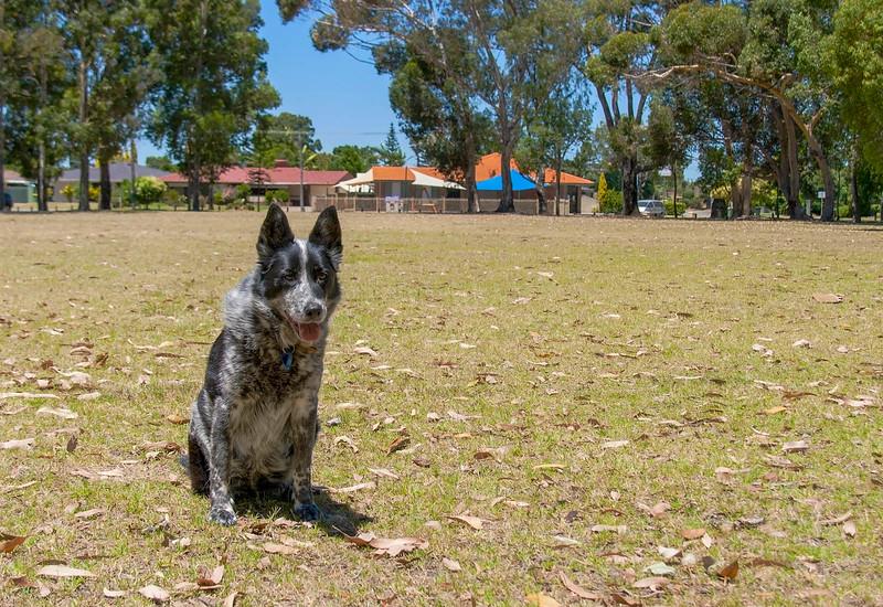 Cinders on a Walk in Jennings Park