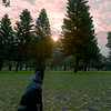 Cinders at Sheldrake Park Sunset
