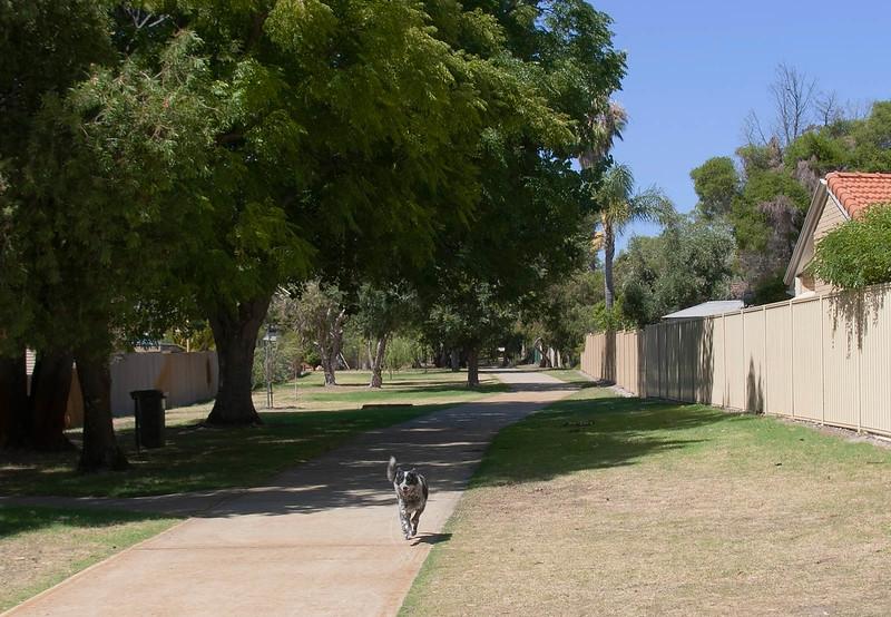 Cinders on Dog Walk