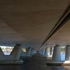 Mt Henry Bridge Understory