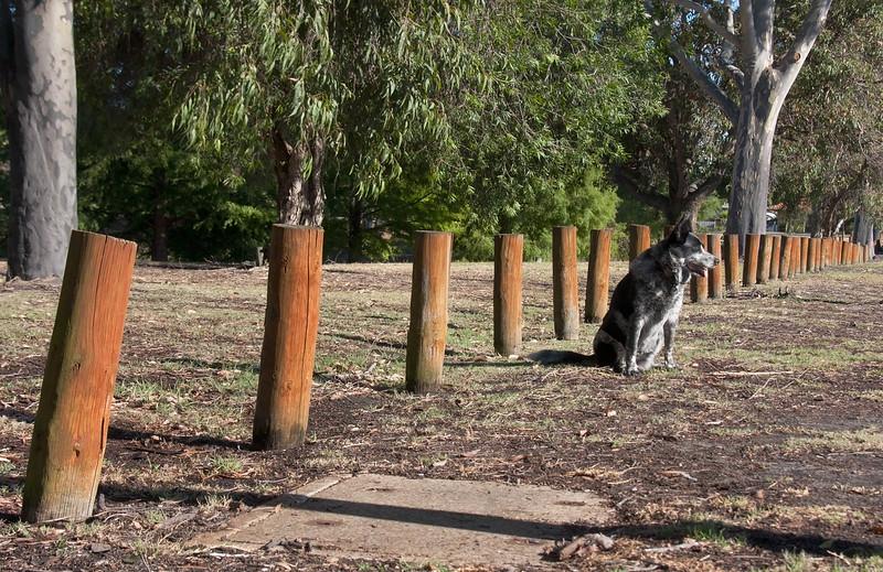 Cinders at Sheldrake Park Fences