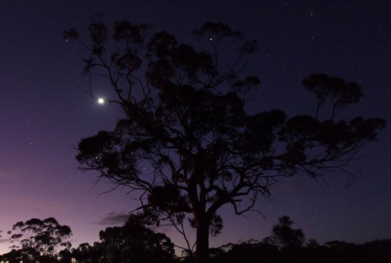 Moon and Venus in Tree