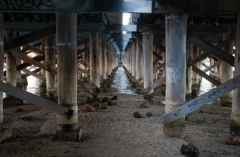 Canning Bridge Understory