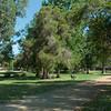 Cinders running at Sheldrake Park