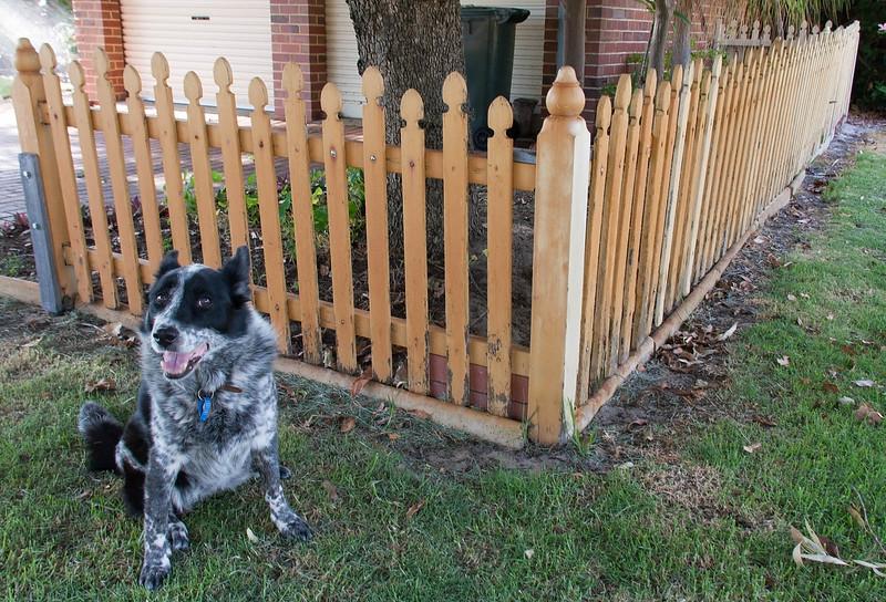 Cinders at Sheldrake 'Fences'