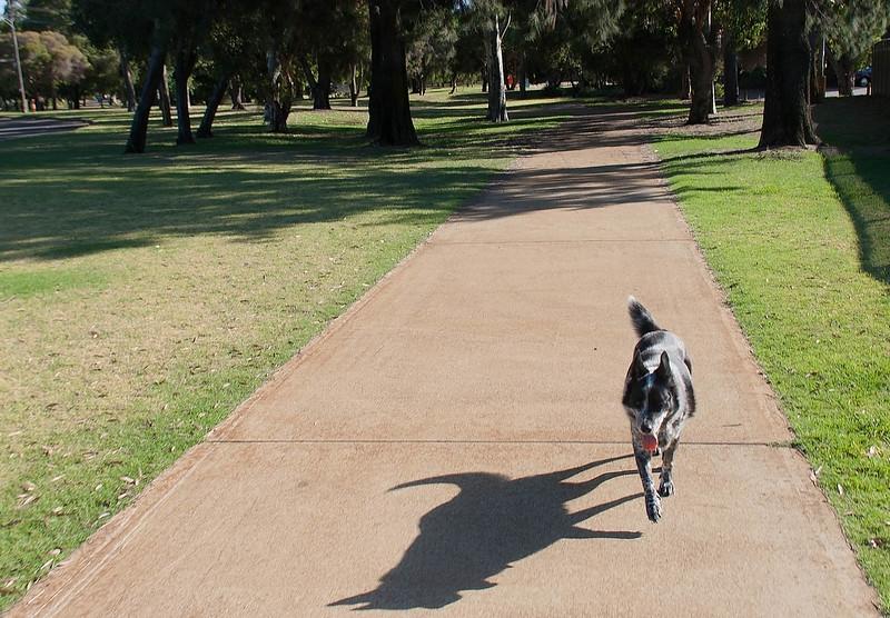 Cinders at Sheldrake Park