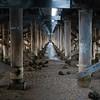 Day 14 - Canning Bridge Understory