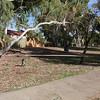 Cinders at fallen tree in Sheldrake Park