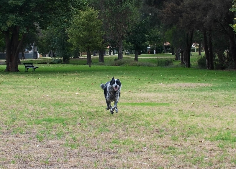 Cinders running at Sheldrake Park - 22/1/2015 Alternate