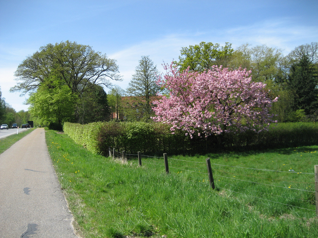 Everything was in full bloom. Spring in Denmark is absolutely amazing.