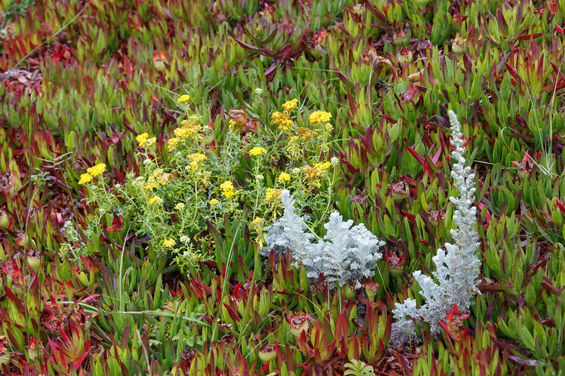 Beachside vegetation