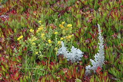 Beachside vegetation