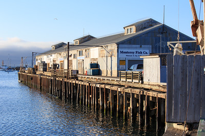 Sardine fishery