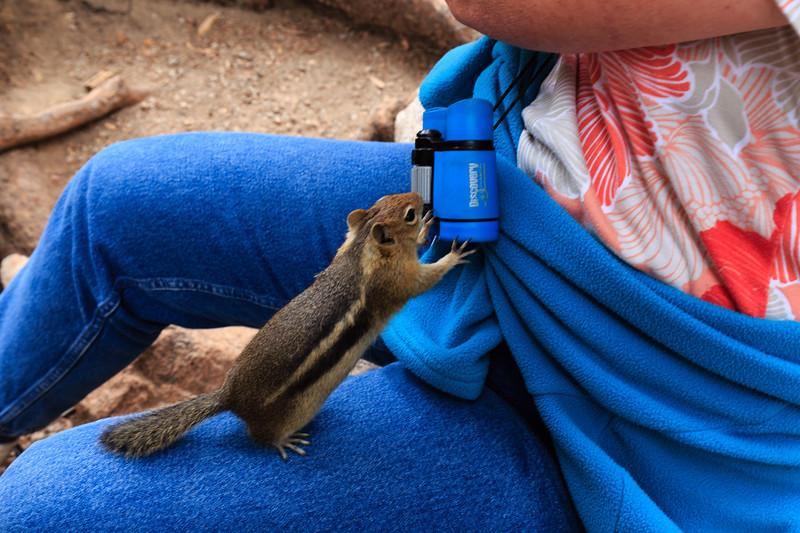 Mooching chipmunk