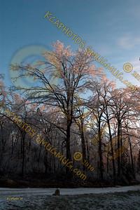 2009 Ice Storm Day 3  1-30-2009 7-29-50