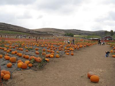 2009 October Pumpkin Patch