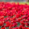 Centenary of Armistice Day