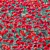 Centenary of Armistice Day