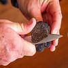 Truffle Hunting - Inside a Truffle