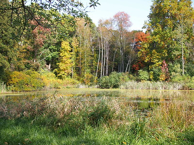 Slayton Arboretum