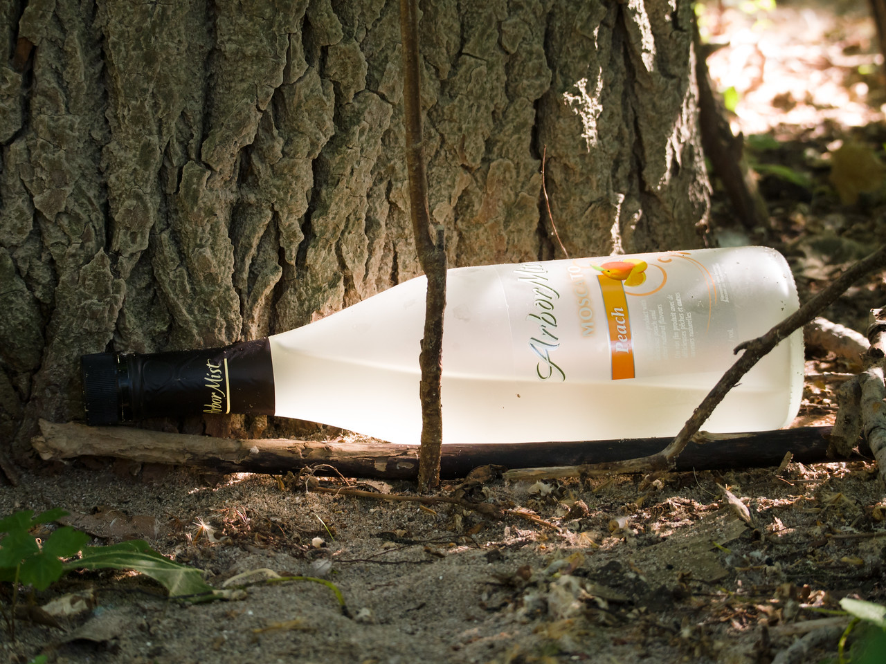 Bottle in a forest