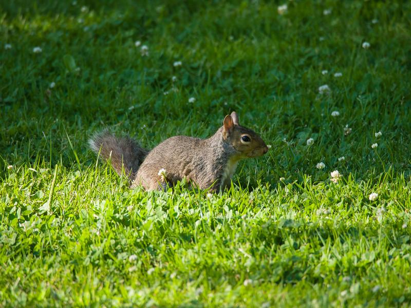Sunbeam Squirrel