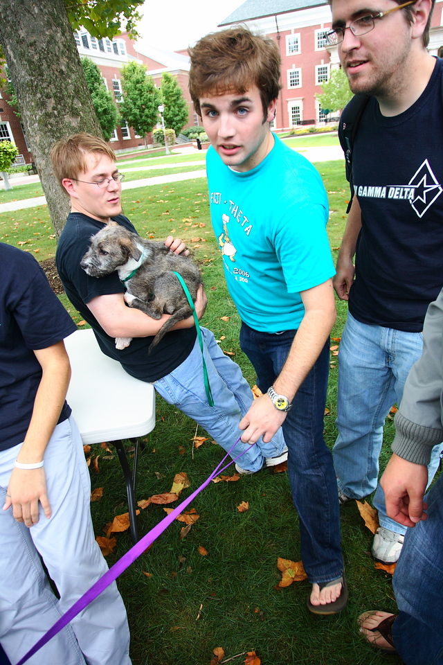 Bryan Lesswing '10, Matt Welch '10, and Jesse Gardener '10 play with dogs during the annual Bark-B-Que philanthropy held in conjunction with Kappa Alpha Theta.  <br /> <br /> Photo by Alex Turco