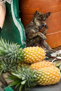 Dog on a pineapple vendors boat, mekong delta, vietnam.