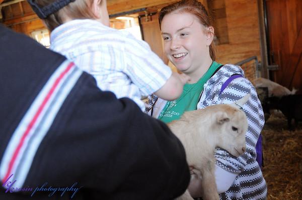 I love the pygmy goats!