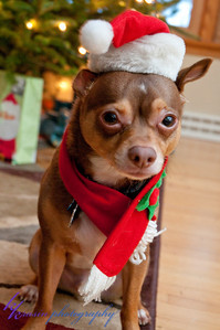 Then I decided to try the Santa hat, but he didn't really want to wear it.