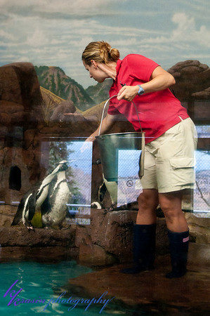 They fed the penguins while we were there